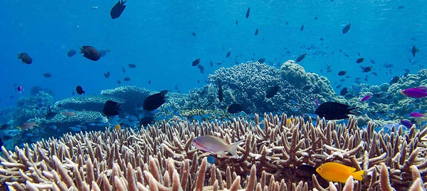 vie-aquatique-biodiversite-ocean-bruehlmann-flickr.jpg