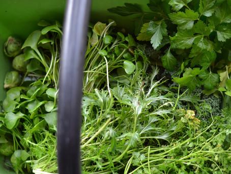 Chlorophylle de janvier