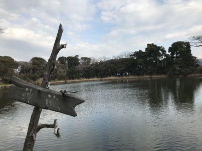 大瀬崎「神池」に行ってみた。