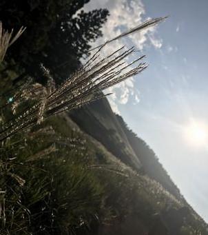 細野高原にススキを見に行ってきた。
