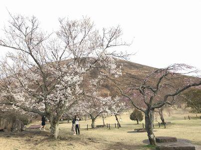 桜ナイトフィーバー