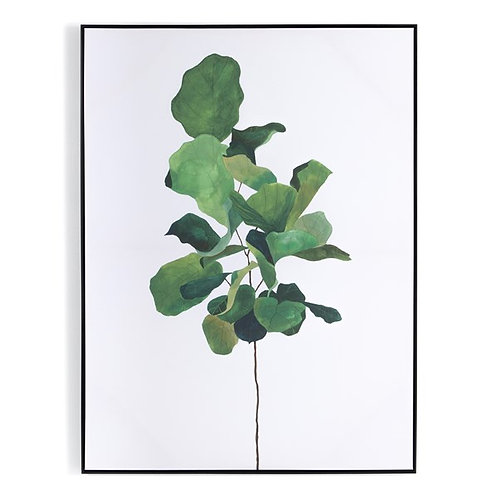 Fiddle Leaf Fig By Jess Engle