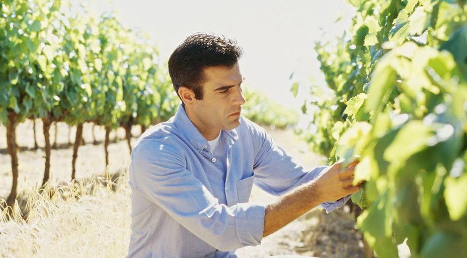 Winemaker