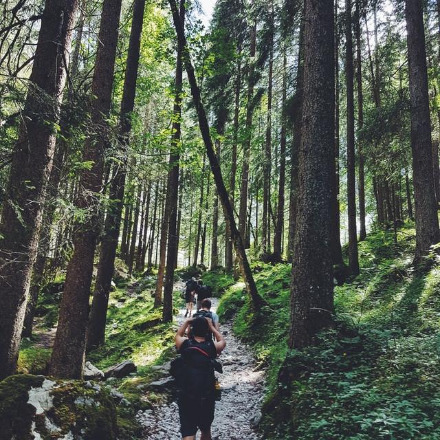 Einfache Wanderung im Altersberger Wald