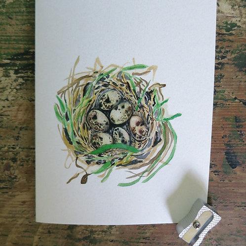 quail's nest