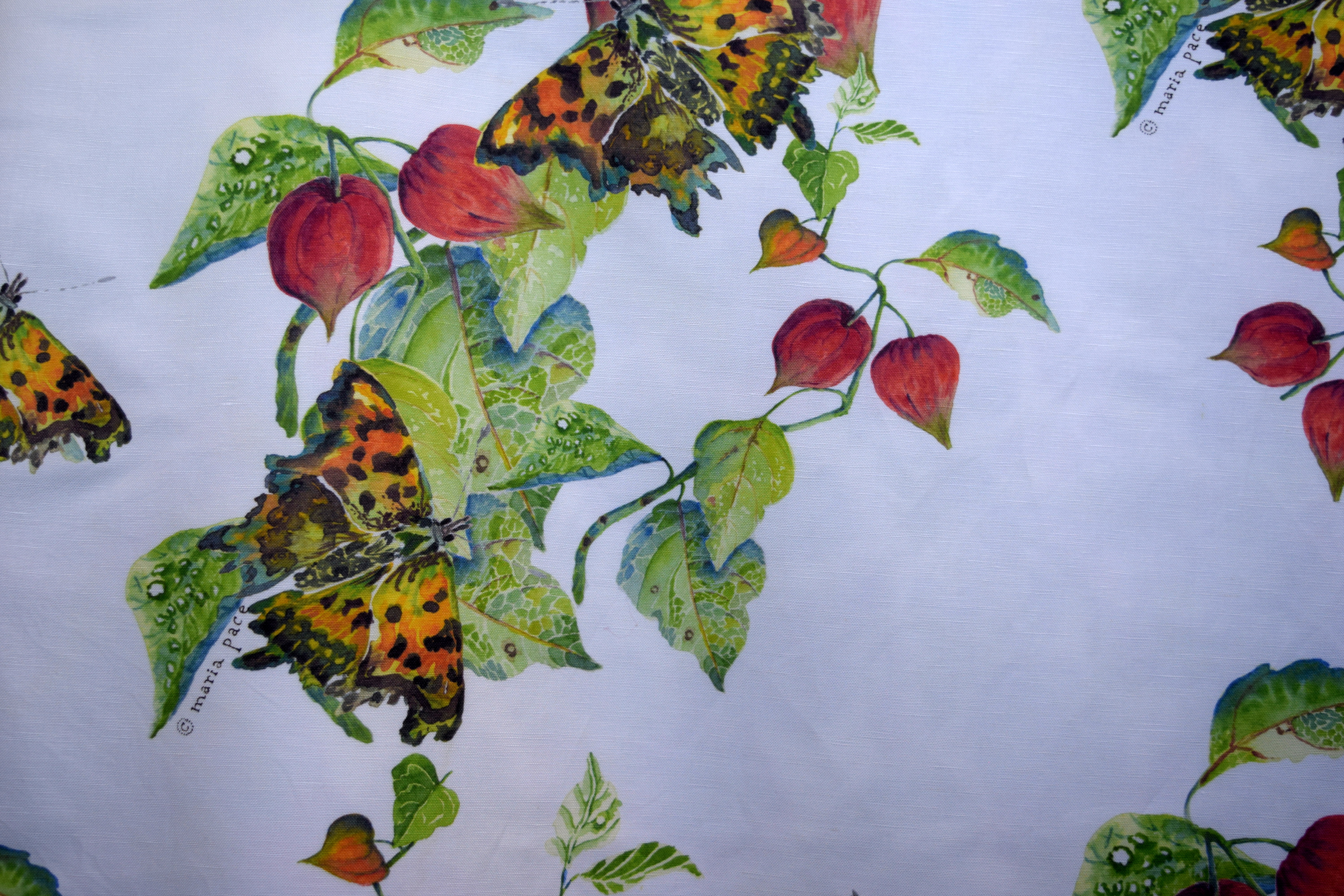 comma butterfly & chinese lantern
