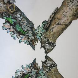 lichen trellis
