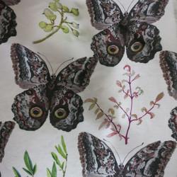 owl butterfly trellis
