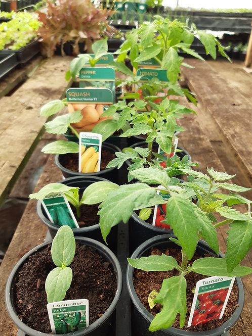 Tomato and veg mix x 12
