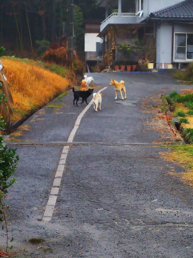 平木さん近所で.jpg