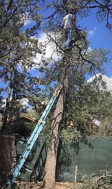 thumbnail_21 04 17 Larry Tree.jpeg