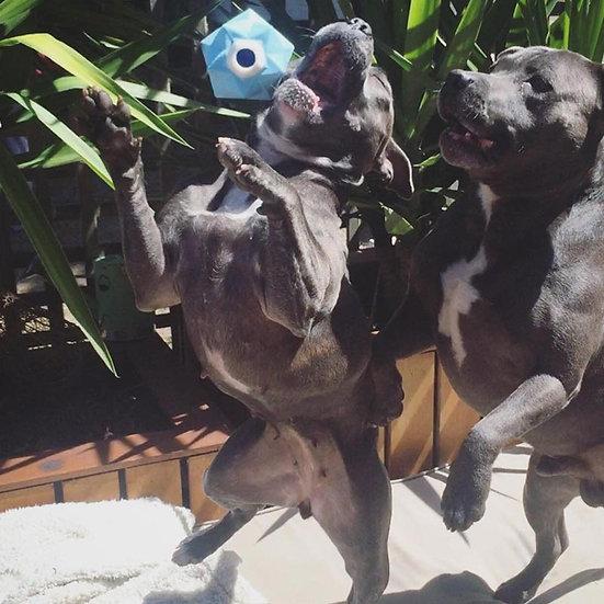 Monster Treat Ball Blue