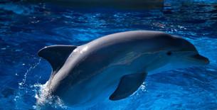 Dolphin on show.jpg