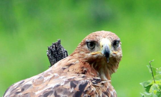 eye of the eagle.jpg