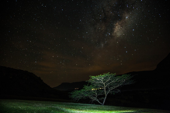 stars tree.jpg
