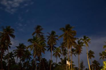 Palms under a full moon_1024.jpg
