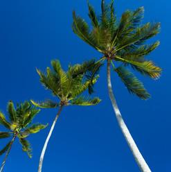 The Palms_1024.jpg