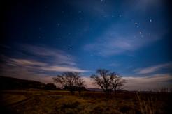 Midnight trees.jpg