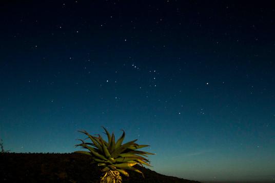 Moonlight AloeLR.jpg