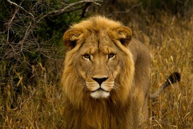 King of the jungle.jpg