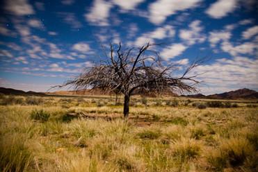 Moonlight Namib.jpg