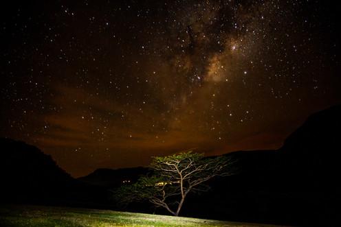 heavenly tree.jpg
