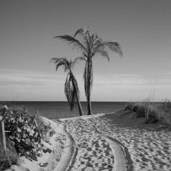 Las Olas Palms.jpg