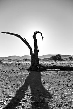 showdow tree.jpg