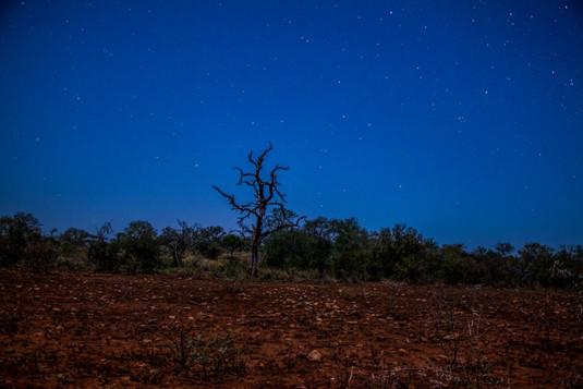 Moonlight tree.jpg