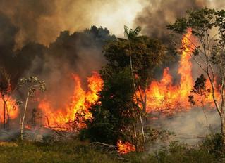 The Amazon is Burning