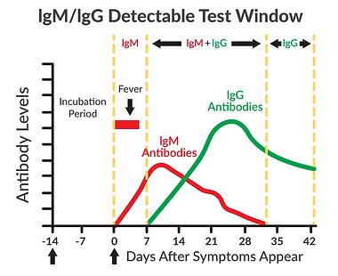 lgM-lgG-Test-Window-Chart-WhiteBG.png