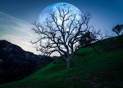 The moon behind the tree