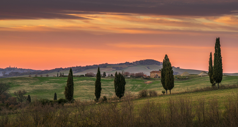 Tree in tuscany