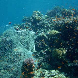 Un immense filet de pêche fantôme retiré des fonds marins de l'Ile Sainte-Marguerite