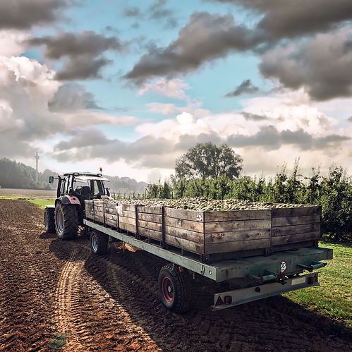 Old tractor carrying wooden crates with