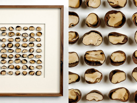 Castanea Halbe /// Nussbaum, geölt, 45 x 45 cm, 2012