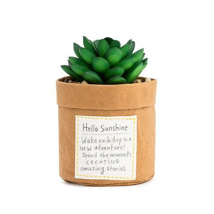 Plant Kindness - Sunshine