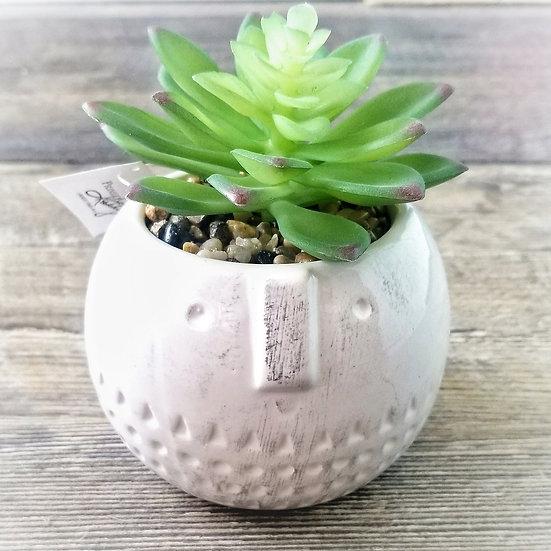 Round Face Stoneware Faux Succulent
