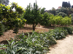 Giardini della Kolymbetra