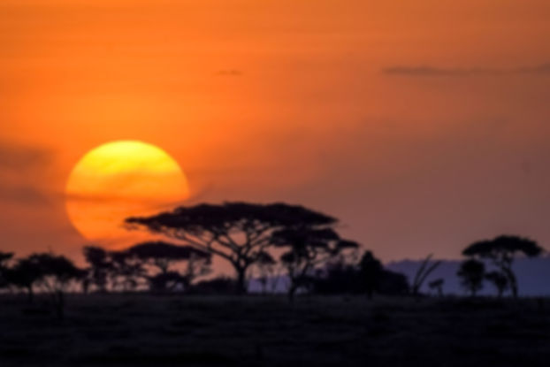Serengeti_sunset-1001.jpg