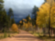 kaibab-fall-colors_3930.jpg