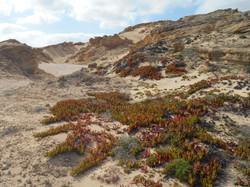 Deserto fossile