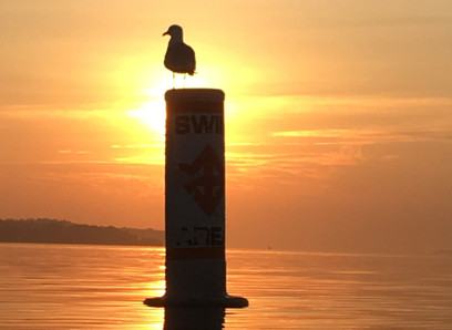 Sunrise & seagulls