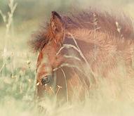 конные туры, конный поход, конный туризм, конные туры 2018, конные туры Удмуртия, Золотая подкова Удмуртия, Дебесы, Наговицыно, конные прогулки