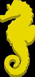 Cavalluccio giallo last dx.png