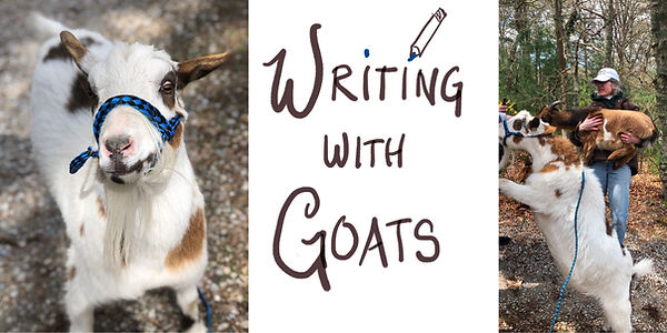 Writing With Goats