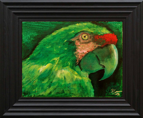 Parrot SOLD