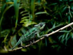Tiersitting Reptilien