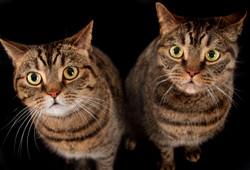 Tierbetreuung für Katzen