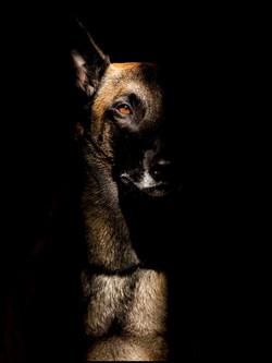Tierbetreuung Hunde